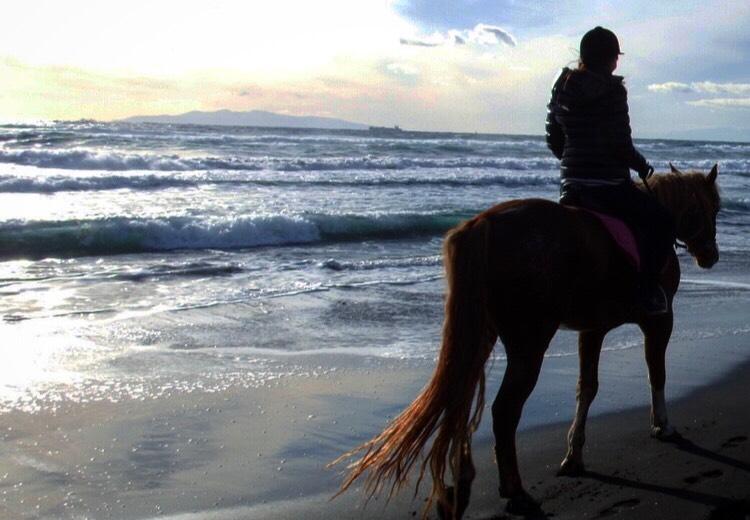 ボスに選ばれる者は、人間も馬も同じ