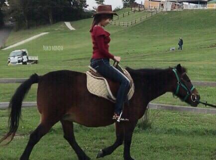 馬には乗ってみよ 人には添うてみよ。